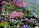 Alpine Plants Will Compliment Your Rockery Garden