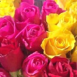 Exhibiting Roses – Fragrant Roses and Beautiful Roses