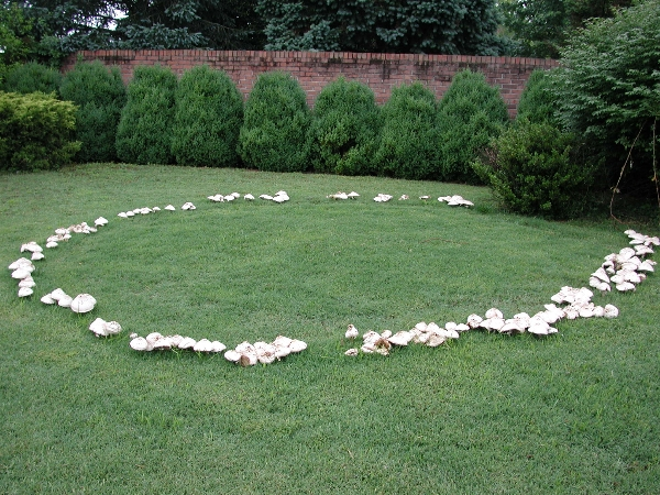 Identify Turfgrass Diseases Fairy Rings