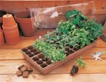 Expert Tips for Sowing Vegetables Seeds Successfully in Dry Weather