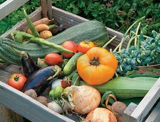 http://www.gardeninginfozone.com/wp-content/uploads/2010/07/home-vegetable-gardening-4.jpg