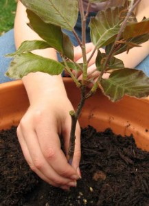 propagating trees and shrubs