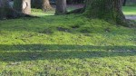 Expert Tips for Removing Lawn Moss