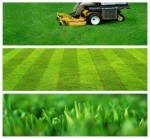 Expert Tips on Grass Mowers and Mowing Lawns