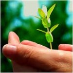 Expert Tips for Propagating Trees and Shrubs – Budding & Division