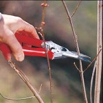 Pruning Trees and Shrubs – How to Prune Shrubs
