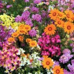 How to Grow Annuals and Biennials Successfully