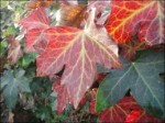 Discover Climber Plants for Foliage