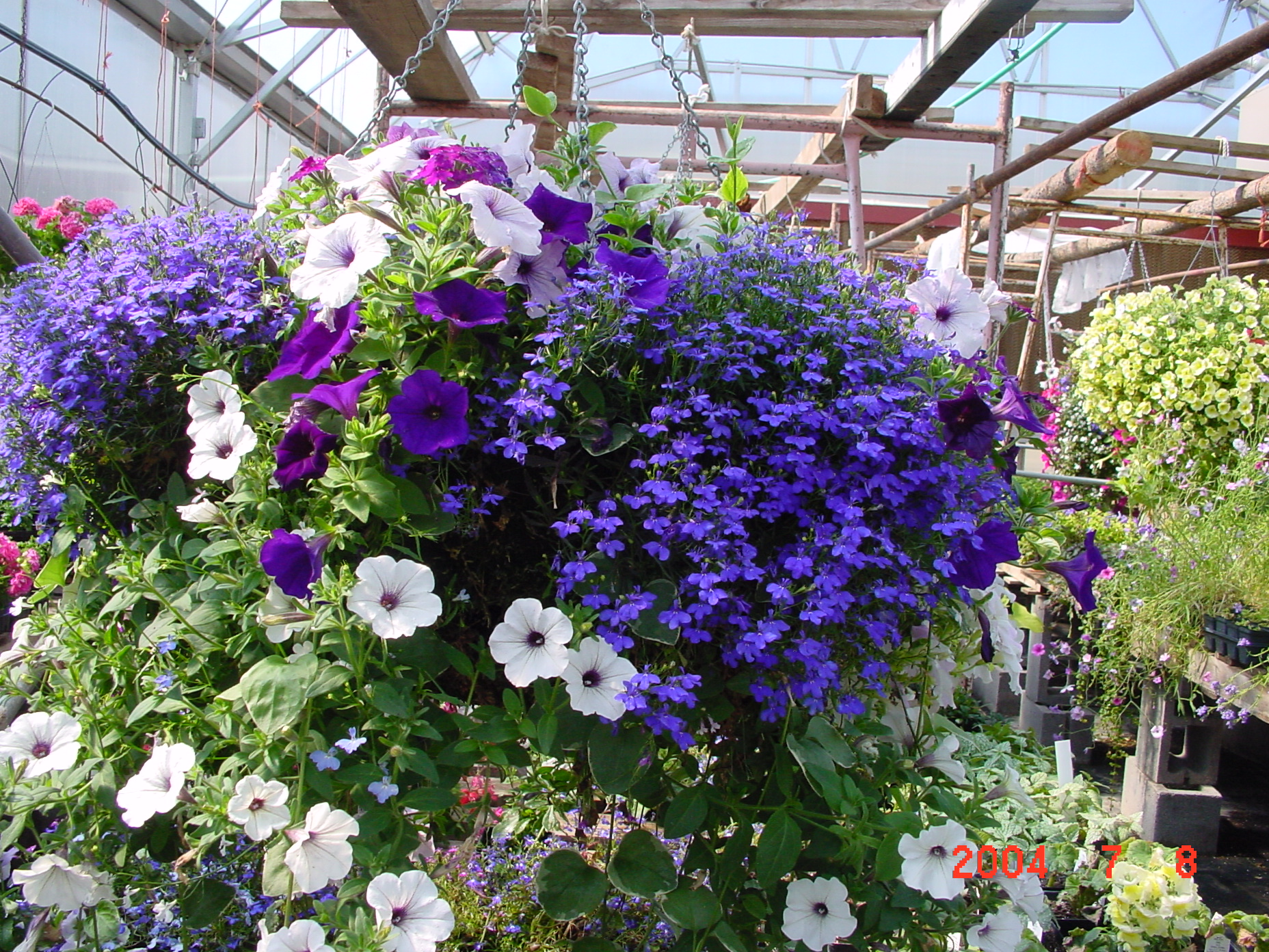 Discover The Beauty Of Hanging Flower Baskets Container Gardening