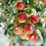 Expert Tips for Growing Fruits Successfully in Your Fruit Garden
