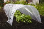 Expert Tips for Strip Cropping and Garden Cloches