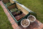 Green House Gardening – Frames and Garden Cloches