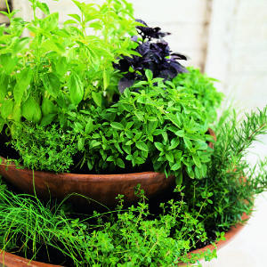 growing herbs at home - chives, rosemary and thyme