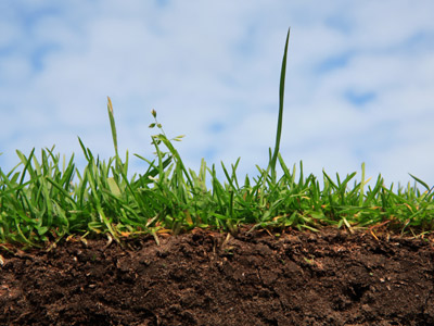 Living soil and how improving soil benefits your crops for Is soil living