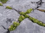 Rock Gardens, Alpine Garden Plants and Pavements