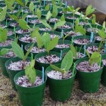 Propagating Plants – Alpine Garden Plants