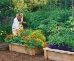 Designing Raised Beds for your Garden