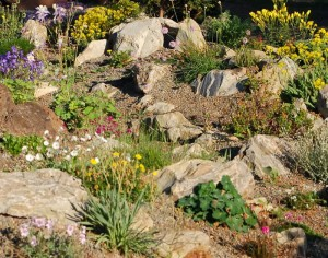 caring for rock garden plants