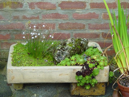 The Original Sink Gardens Were Made In Sinks Carved From Solid Blocks Of  Stone But These Have Become Scarce And Very Expensive. With A Little  Ingenuity, ...