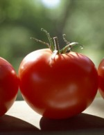 Expert Tips for Tomato Ring Culture Supergrowth