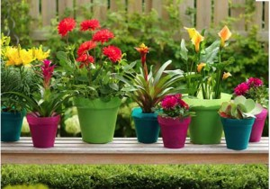 colourful garden pots and planters