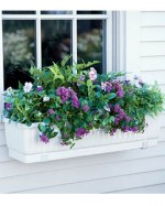 Container Gardening Ideas for Window Planters