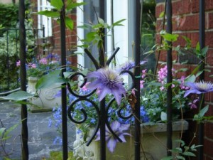 gardening ideas - hedges or fences? Making a Garden Boundary