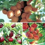 Growing Different Fruit Varieties for Your Garden