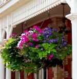 Gardening Tips for Watering Hanging Flower Baskets