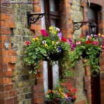 How to Make Hanging Flower Baskets Safe