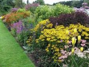 flowers in the garden - herbaceous borders