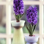 Indoor Flowering Plants – Growing Indoor Flower Bulbs