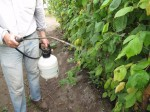 Garden Insecticides and Fungicides – Letting Science Help in the Garden