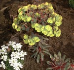 Rock Garden Ideas for Planting and Stocking Your Rock Garden