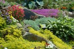 Rock Garden Plants for Your Rockery Garden