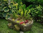 Alpine Sink Gardens – Where to Put Them and What to Put in Them