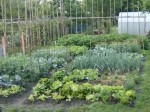 Starting a Vegetable Garden – Vegetable Garden Tips