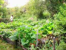 Vegetable Garden Tips for Vegetable Garden Plans and Layout