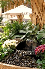 Choosing Water Garden Plants for Your Water Garden Design