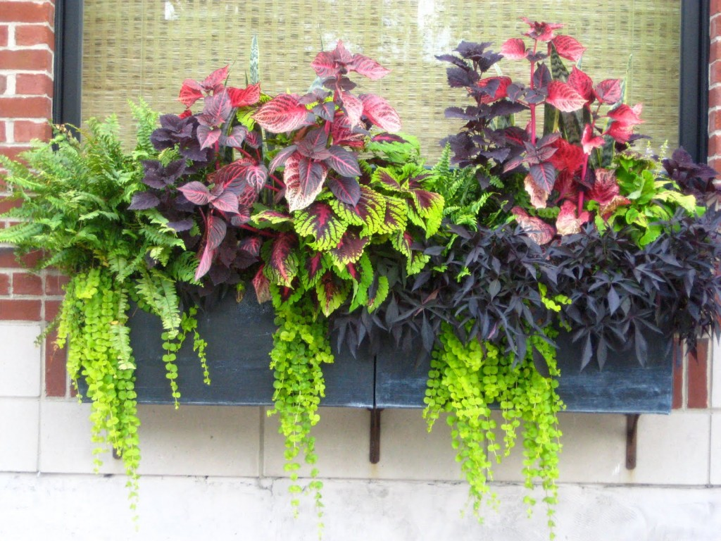 Container gardening ideas protecting window flower boxes for Container gardening ideas