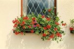 How to Grow Hanging Flower Baskets and Window Flower Boxes