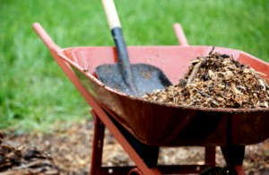 applying garden mulch