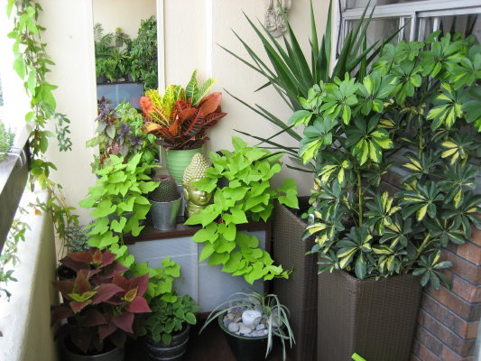 Roof gardening roof garden design and balcony gardening for Indoor plants design ideas