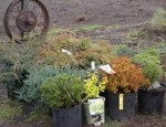 When and How to Buy Shrubs and Bushes