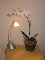 Caring for Orchids Over-Wintering and Resting