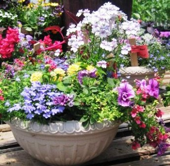 Flower  on Container Gardening Ideas And Garden Containers