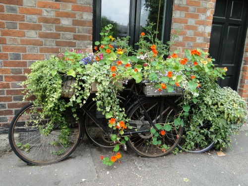 All about gardening and nature container gardening ideas - Container gardening ...