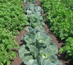 Kitchen Garden Vegetable Plot Crop Rotation