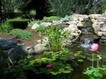 Water Gardening and Water Features – Repairing Water Garden Ponds