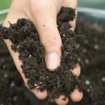 Recognizing Your Gardening Soil